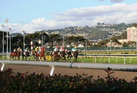 golden gate fields picks