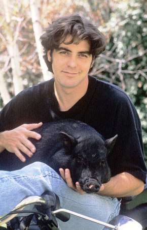 george clooney and piglit max