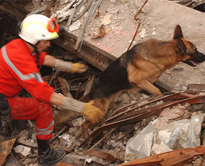 K 9 Heroes September 11th attacks