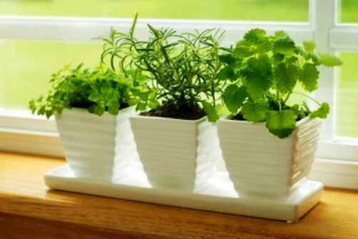 how to grow herbs indoors during winter